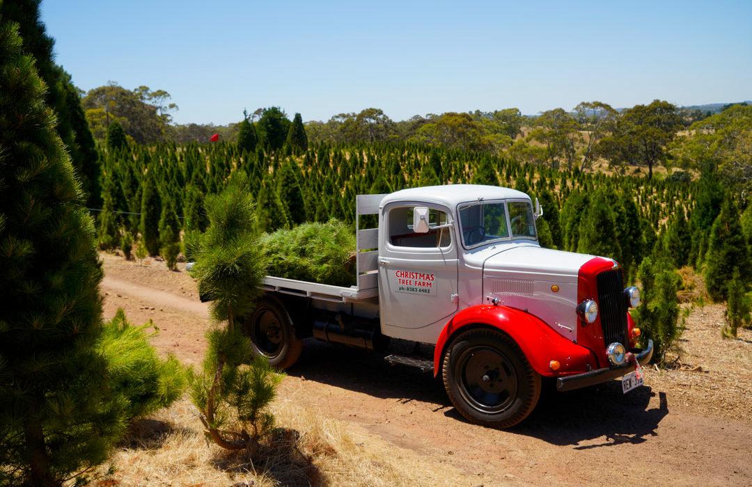 The-Farm-Tractor-Rides